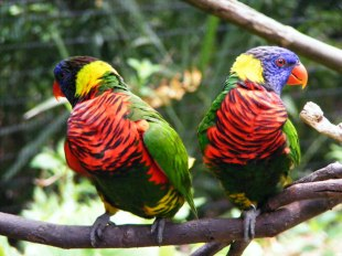 Beautiful Birds From Behind the Pen