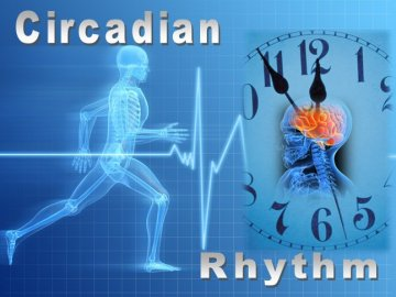 Circadian Rhythm's Effect On Our Biological Clock From Behind the Pen